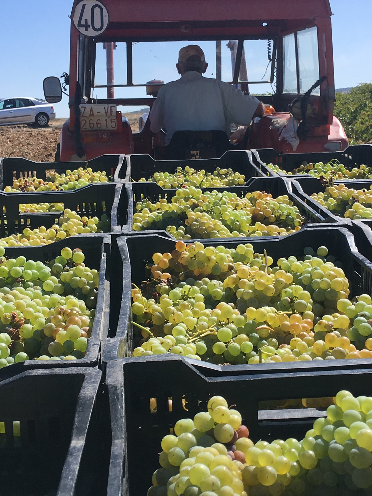 Arthur BQ 2017 Grapes on their way to the press
